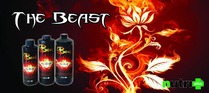 nutri plus the beast